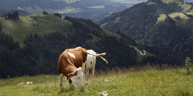 Tirol Werbung - Tirol-CH - ADV2 - SL - 112 4513 - B2 - 960x480