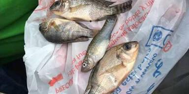Tote Fische Mexiko