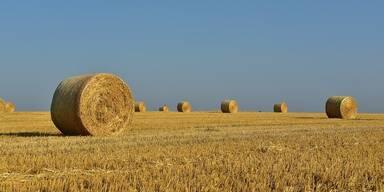 Trockenheit Landwirtschaft 121219.jpg