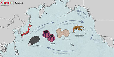Tsunami Tiere
