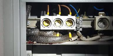 Asten Schlange in Stromkasten