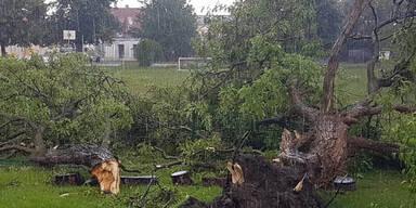 Baden Pottendorf Windhose Schaden Unwetter