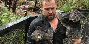Nach Flammen-Hölle drohen Koalas jetzt zu ertrinken
