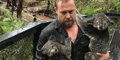 Koalas Australien Regen