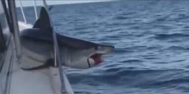 Hai Geländer stecken Long Island
