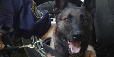 Zorro Polizeihund