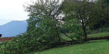 Unwetter: Sturm riss in Tirol mehrere Bäume aus