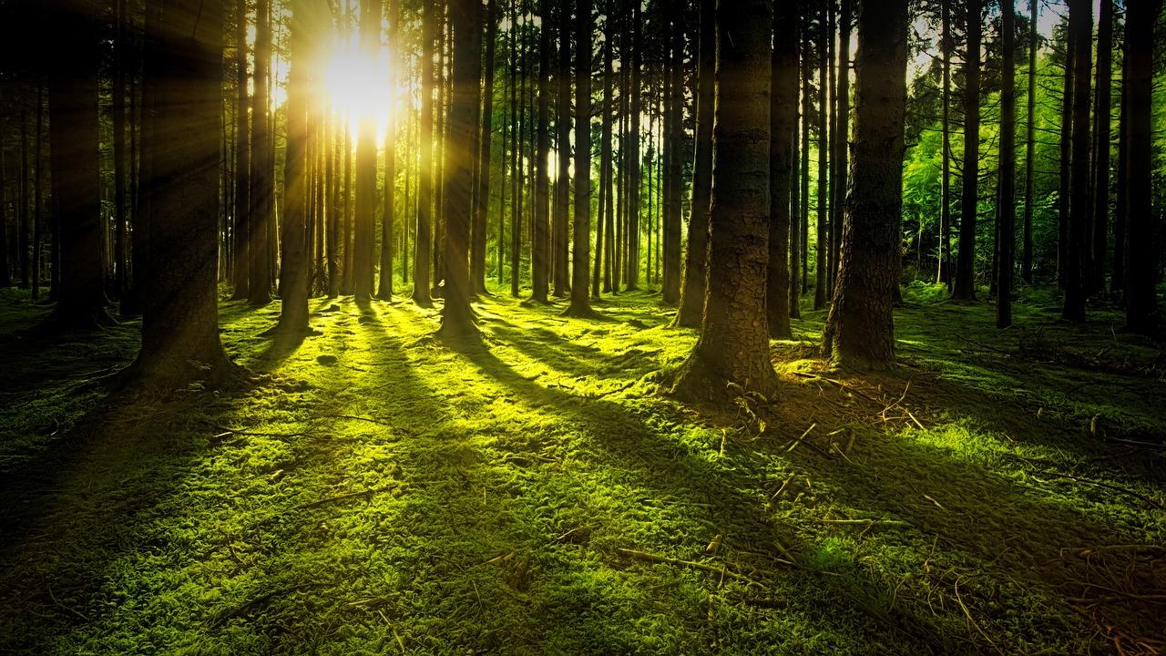 Wald - Natur - Idylle