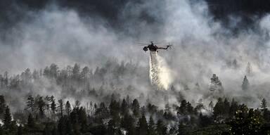 Waldbrand - Unser Tiere - Tierschutz-CH - Klimawandel, Naturkatastrophen - Story-Header