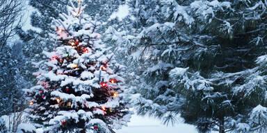 Schnee ade! Wenig Chance auf Weiße Weihnachten | Wer noch hoffen darf