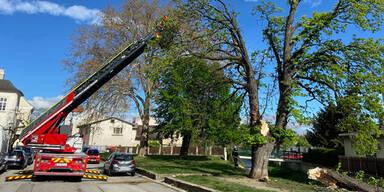 Sturm: Feuerwehrmann von Baum getroffen
