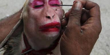 Ein Straßenkünstler aus Pakistan schminkt seinen Affen