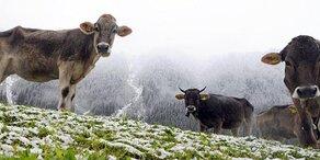 Irres Wetter: Am Samstag kommt Schnee