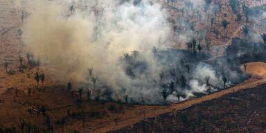 Brasilien: Zahl der Amazonas-Brände um 28 Prozent gestiegen