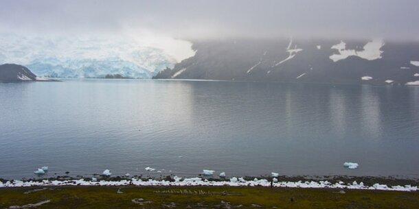 Antarktis wird immer grüner
