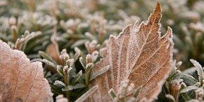Kälte-Schock: Jetzt kommt der Frost