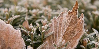 Winter Frost Eis Raureif