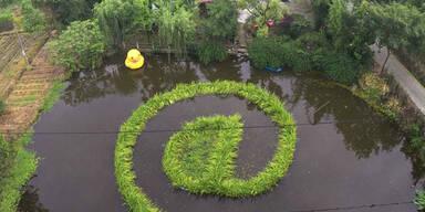 Ein chinesischer Bauer hat das @-Zeichen in einem Teich angepflanzt