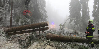 Bäume eingeknickt Eisschicht Waldviertel