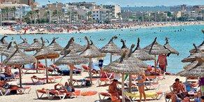 Ratten-Lungenwurm: Alarm im Urlaubsparadies!