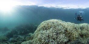 Riesiges zweites Riff am Great Barrier Reef entdeckt