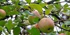 Obst- und Ziergehölze