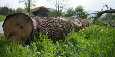 Forstarbeiter von Baumstamm überrollt: Tot