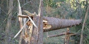 Tornado zerstörte mehr als 50 Hektar