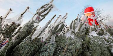 Weihnachtsbäume