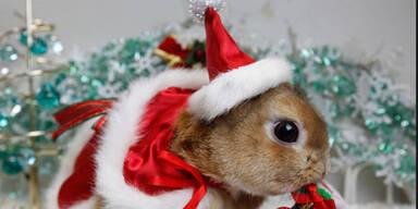 christmashase.jpg
