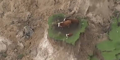 cows10.jpg
