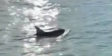Delfin-Paar am Markusplatz in Venedig gesichtet