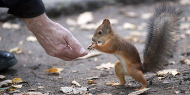 eichhörnchen_getty.jpg