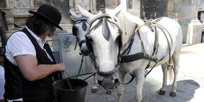Gibt es heute hitzefrei für Wiener Fiaker-Pferde?