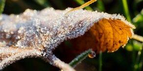 Kälte-Schock: Der erste Frost ist da