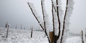 Jetzt kommt Frost - mit schlimmen Auswirkungen!