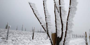 frost4299.jpg