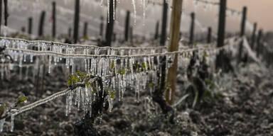 frost63.jpg