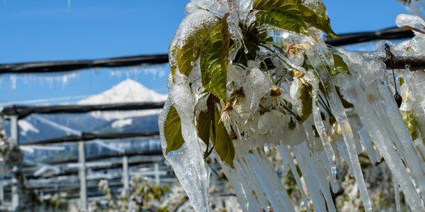 Rekord-Frost: 50 Millionen Euro Schaden