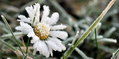 frost_ap.jpg