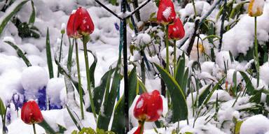Schnee Frost Blumen