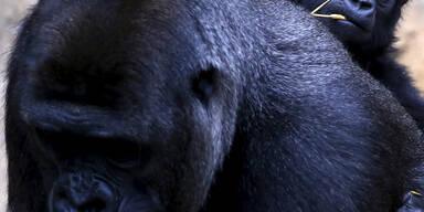 Mjukuu reitet auf Mama Mbeli im Zoo in Sydney