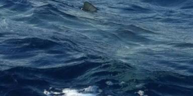Haifisch Mallorca