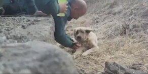 Einsatzkräfte retten Hund vor Waldbrand-Inferno