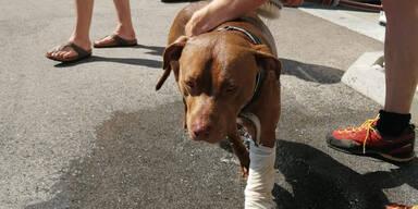 Hund von Wanderern wurde von Kreuzotter gebissen