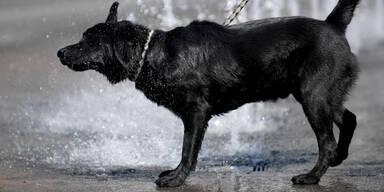 hund0691.jpg