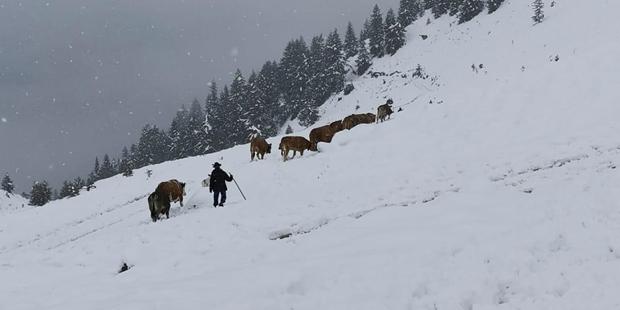 Schnee Winter Tirol Almabtrieb