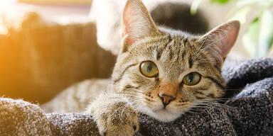 Welt-Katzentag: Wir haben zwei Millionen Katzen
