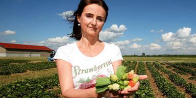 Obst-Ernte ist bedroht