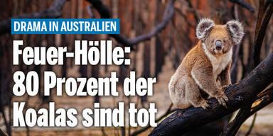 koalas_wetterAT_relaunch.jpg